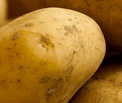 Crema di patate e porri al basilico
